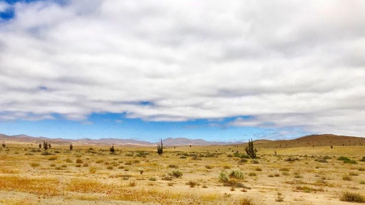 zwischen Vallenar und Copiapo