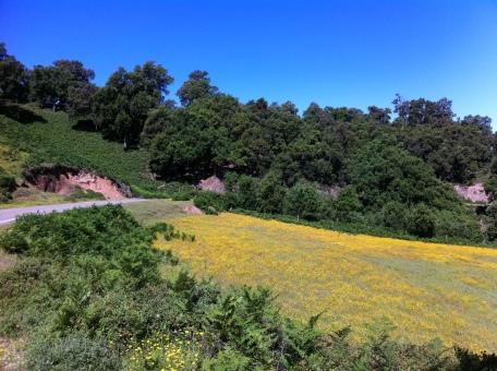 Nationalpark südwestlich von Taza
