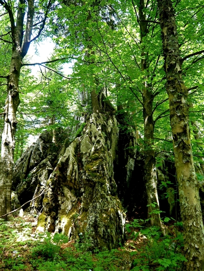 faszinierende Wälder