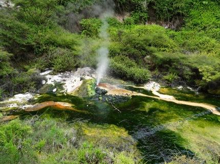 Waimangu, Dampfkochtopf
