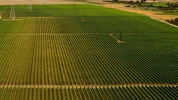 Rarangi Winery