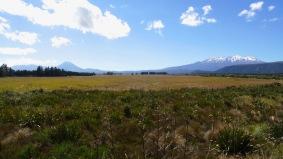Mt Ngauruhoe und Mt Ruapehu