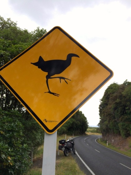 Birds Crossing