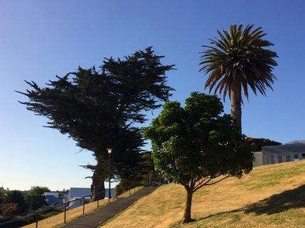 Wanganui three trees