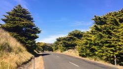 ....Trees