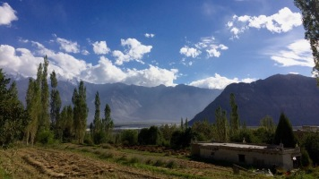 Nubra Valley, Oase in Sumur